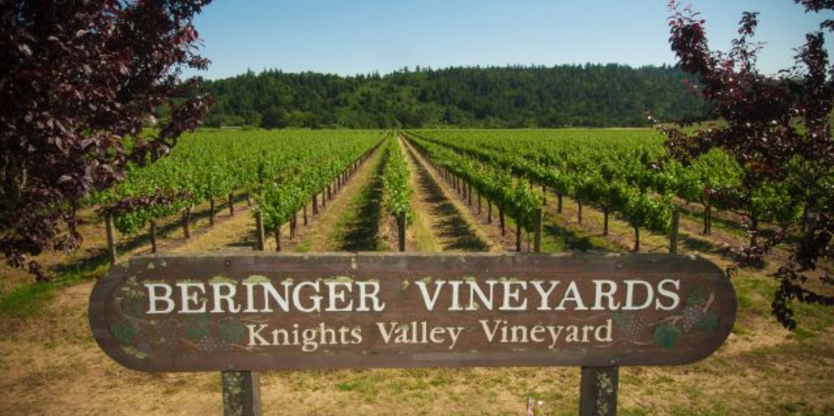 Beringer Vineyard