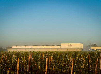 Picture of warehouse behind of a vineyard