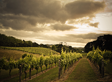New Zealand Vineyards